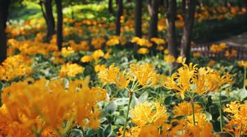 申城当季赏花季地