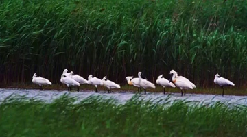 崇明生态文化旅游节