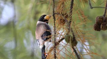 上海植物园迎来最佳观鸟季