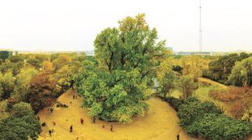 上海对百岁以上古树名木分级保护