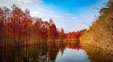 湖畔红杉林如梦如幻