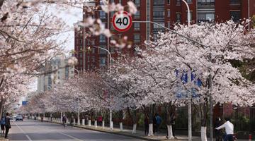 沪上绿化特色道路繁花盛开