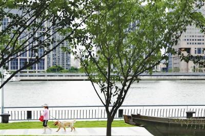 """包括遛狗在内的休闲活动在滨江并非""""处处通行"""",管理方呼吁出台全市统一的滨江管理规章制度,让市民游客更好地""""知法守法""""。本报记者袁婧摄"""