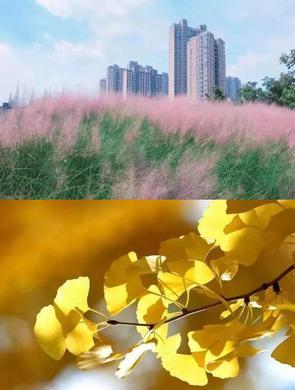 上海秋天正确打开方式