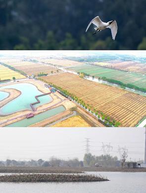 嘉北郊野公园新增超6万㎡湿地