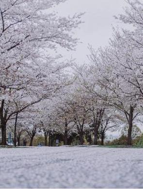 上海各公园迎来最美赏花季