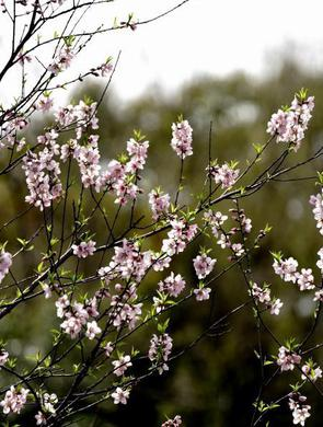 上海:春至花如錦