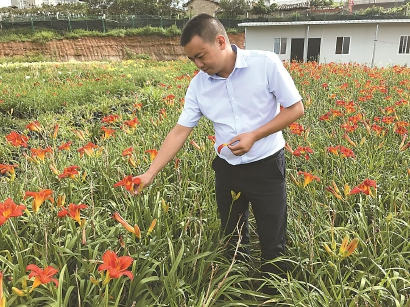 李伟介绍与上海合作培育的萱草。 俞陶然 摄