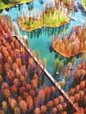青西郊野公园依旧层林尽染