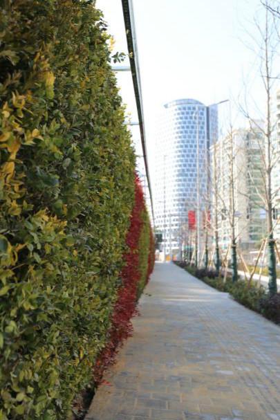 图说:道路景观增加了绿化种 植。齐传彬 摄