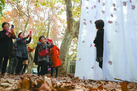 ◆岳阳路上的缤纷落叶与别致的艺术装置作品相映成趣,市民、游客纷纷驻足拍照留念。
