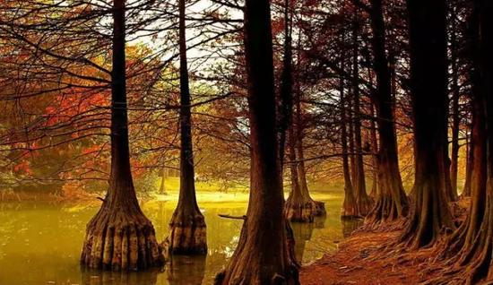 金湖水上森林公园