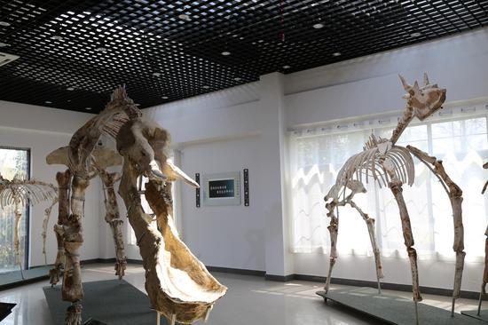 古生物化石馆