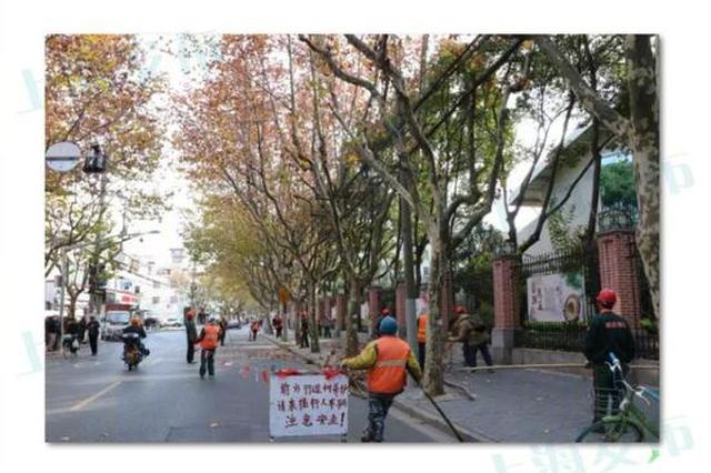 上海各区行道树冬季修剪铺开 预计明年4月前完成