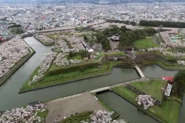 日本10大绝佳赏樱胜地