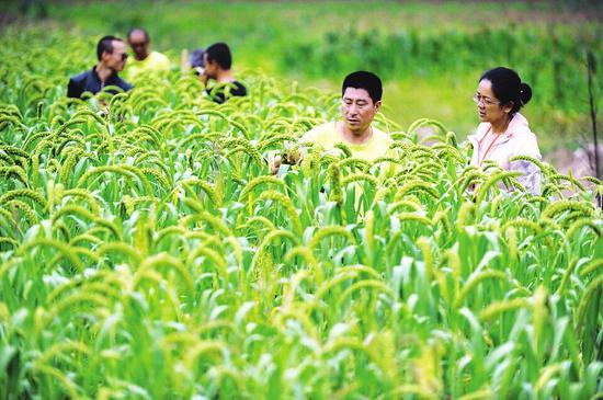 山西农民和北京媳妇创业脱贫