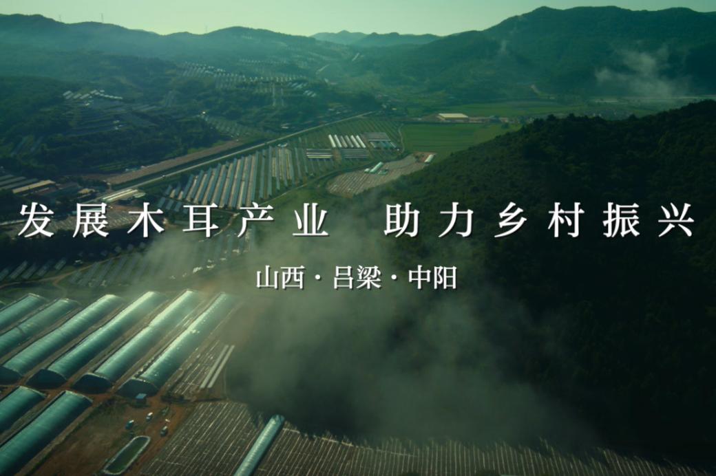 吕梁中阳:小木耳种出大产业