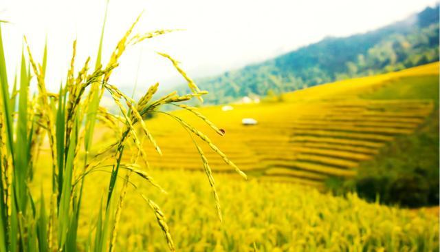 山西2021年将投资455亿元支持农业重点项目