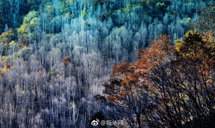 秋游好去处 沁源林场金黄一片