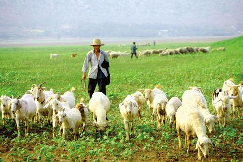 """太原:羊肉价格持续上涨 市民感叹""""羊贵妃""""吃不起"""
