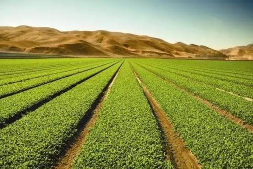 中欧青年农民晋中牵手谋发展 实现乡村振兴