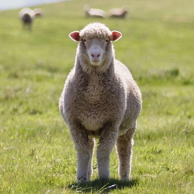 销往日本 山西羊毛产品实现首次出口