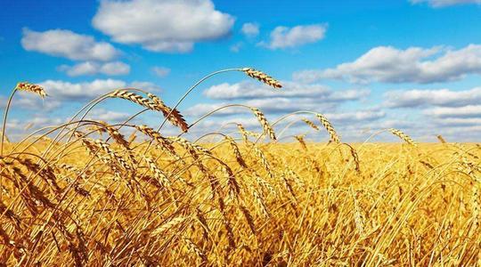 山西省下发实施意见:加强农业种质资源保护与利用