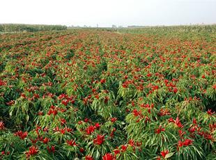 山西:一种产业一种特色 特色农业铺就百姓脱贫路