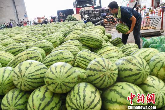 西瓜作為解暑降溫必備水果頗受人們歡迎。 武俊杰 攝