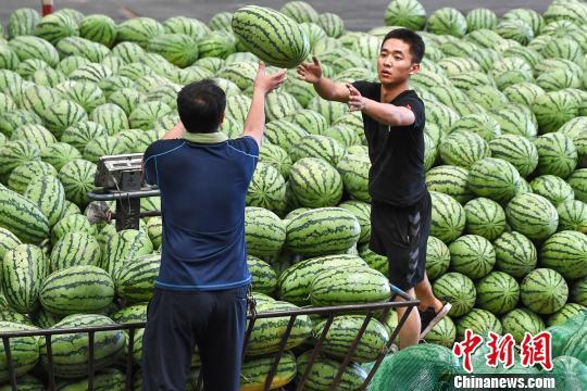 商販忙著搬運銷售西瓜。 武俊杰 攝
