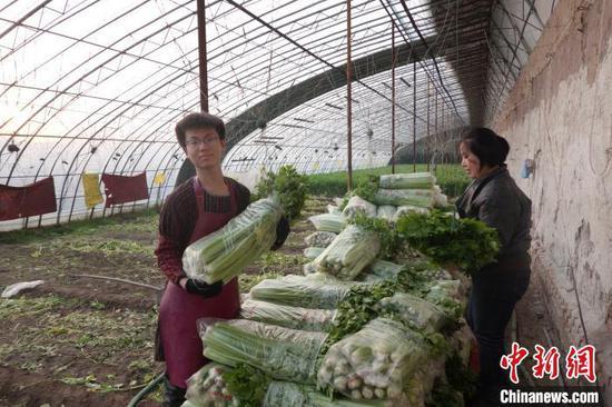 目前,晋源区大棚蔬菜的播种育苗、温室果树的剪枝、花卉的组培、水稻的育苗正在按照农时稳步有序开展。 晋源区新闻中心供图