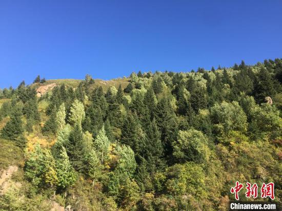 山西森林覆蓋率從2.4%到23.18%,實現了由缺林少綠到綠布其間的歷史巨變。 高瑞峰 攝