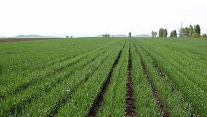 10月降雨偏多 山西冬小麦该如何进行田间管理?