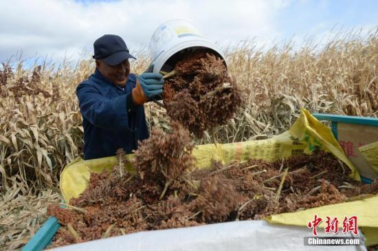 农民田间地头忙收获。记者 刘文华 摄