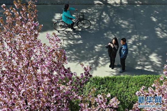 4月8日,学生在用手机拍摄山西农业大学校园里的鲜花。