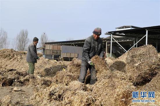 11月7日,山西省大同市浑源县德诚通达科技发展有限公司的工作人员在晾晒秸秆。记者 杨晨光 摄