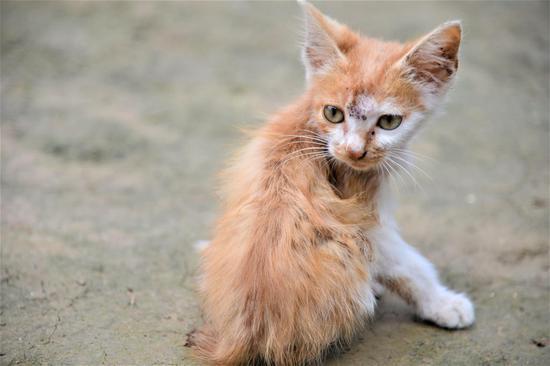 陪伴燕瑞彤的小猫咪