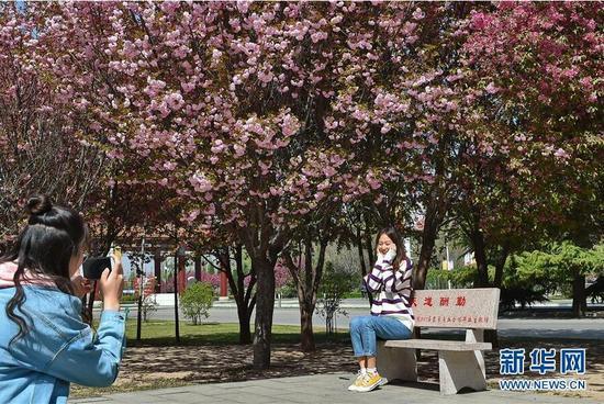4月8日,学生在山西农业大学的校园内拍照。
