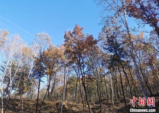 山西开展为期一年的专项行动,集中整治违规野外用火、非法占用林地、破坏自然保护地资源和野生动物保护等方面的突出问题。 高瑞峰 摄
