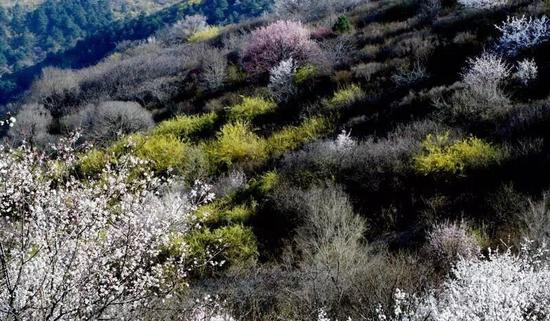 黄花岭美景