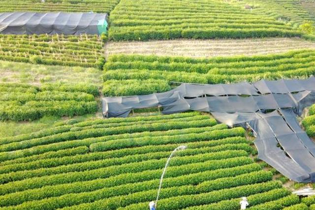 续写旱作农业历史 山西将走上特色农业高效发展之路