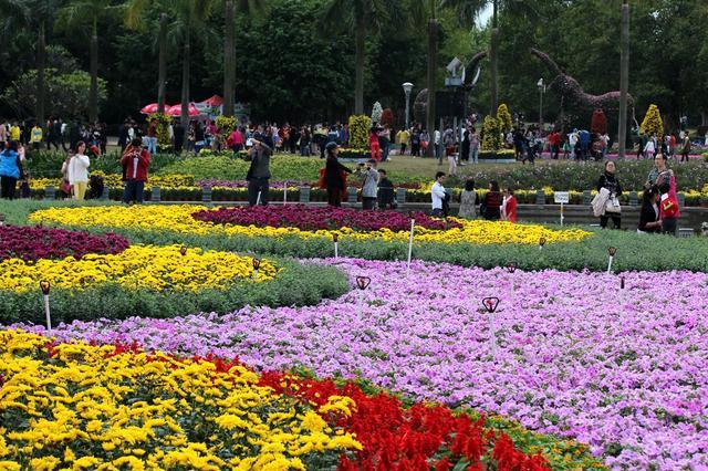 国庆期间35万人次游园赏菊 菊展节后仍将持续