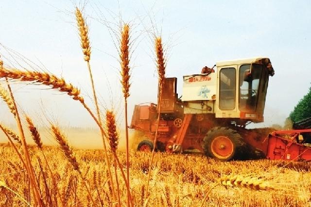 十八大以来 山西粮食总产量历史性跨越增长23.6%
