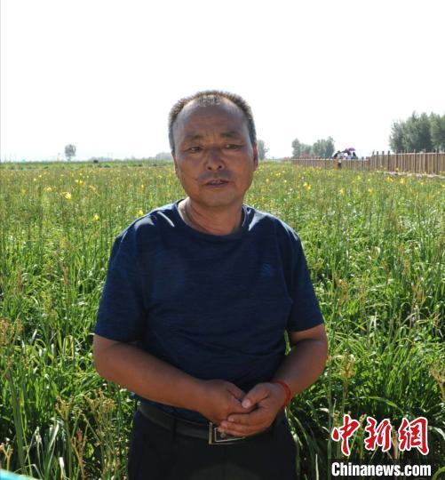 云州区志海黄花种植专业合作社监事杨旗。 张林虎 摄