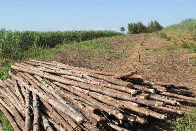 我省森林公安局通报10起破坏未成林违法案例