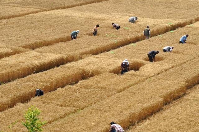 山西98个农业项目拟获中央财政支持