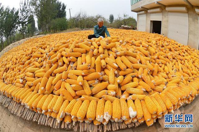 山西27个县(区)开展农业生产托管服务试点