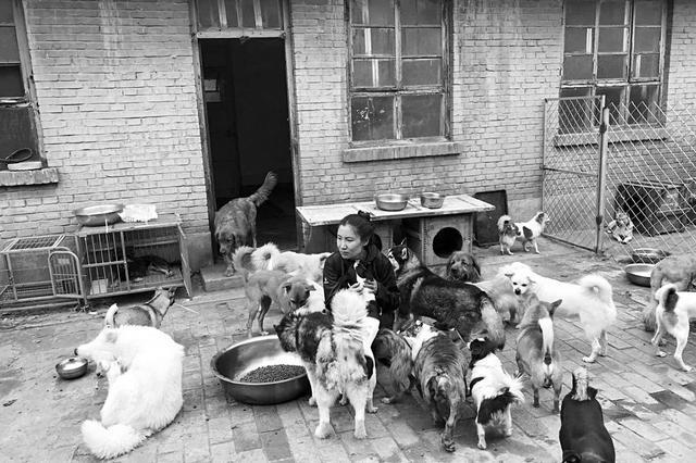 """太原:30只狗狗有人疼但没有""""家"""""""
