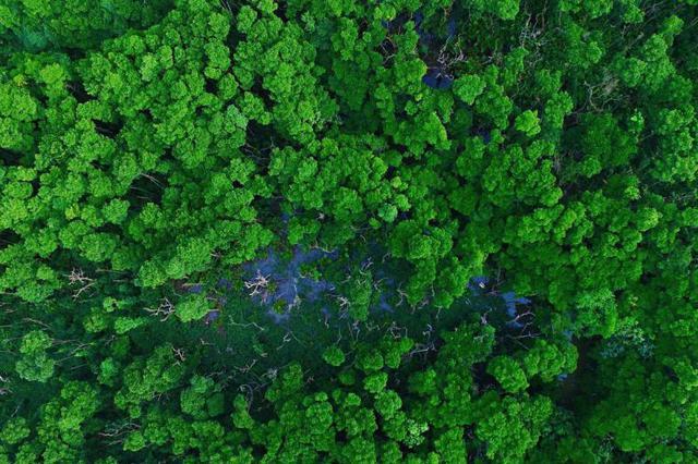 山西计划明年人工造林275万亩 按照每亩500元执行