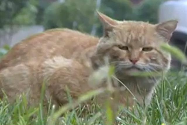 視頻丨太原一小區頻繁發生偷貓事件